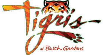 Busch Gardens Tampa announces Tigris