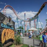 Carolina Cobra Carowinds