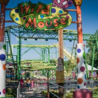 Wild Mouse Beech Bend
