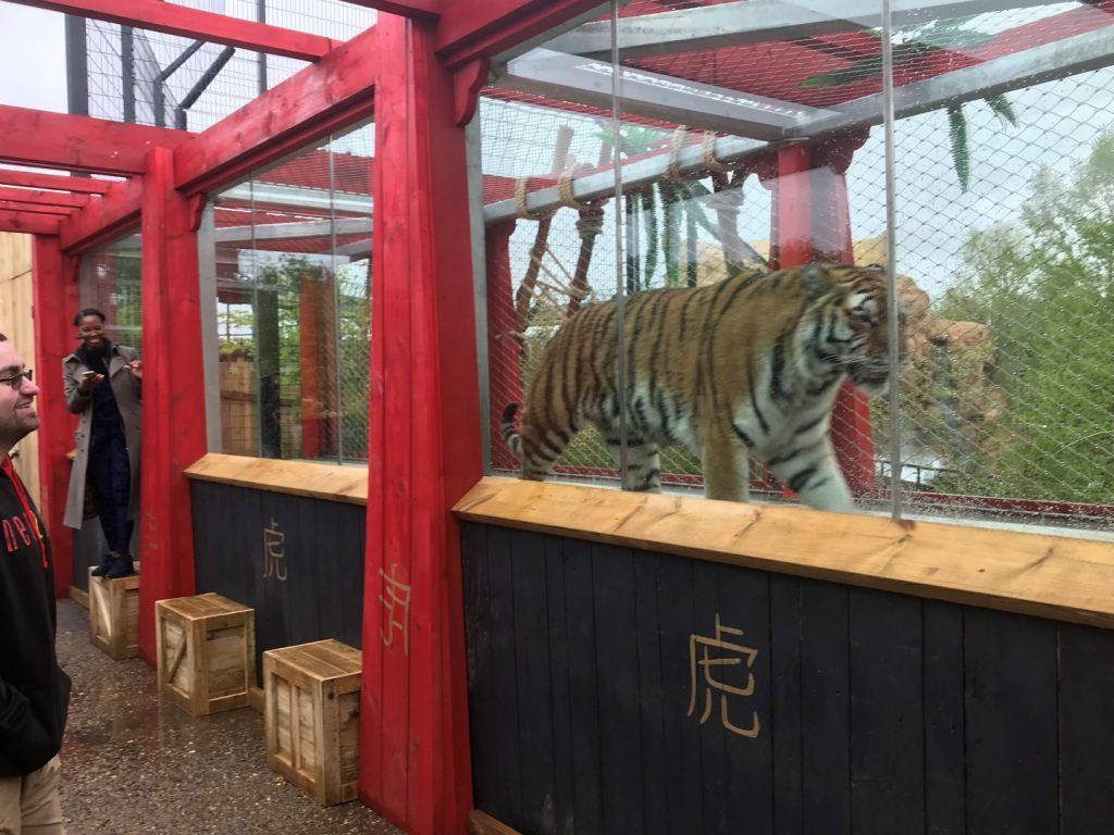 chesington, tiger, log flume